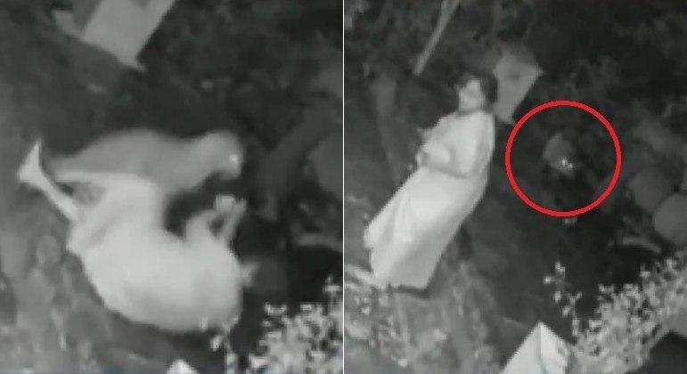 Vítima de ataque de leopardo usou bengala para afastar o animal