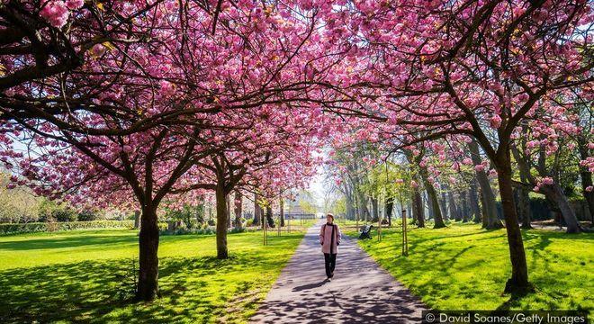 Assim que saímos de casa, mesmo que seja para uma caminhada no parque, nosso cérebro começa a prestar atenção