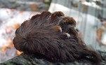 De acordo com Eric Day, gerente do Laboratório de Identificação de Insetos do Instituto Politécnico da Universidade Estadual da Virgínia, o animal é incomum na regiãoVale o clique:Causa até vômito! Surto de lagarta peluda e venenosa assusta cidades