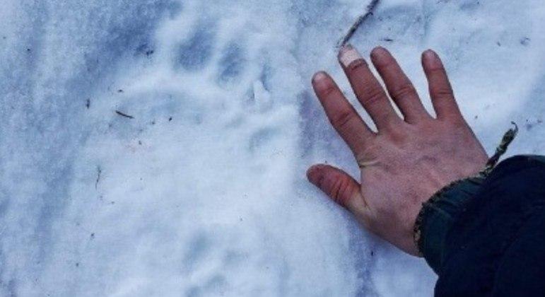 Irmão da vítima atacada por urso comparou tamanho da mão com o da pata do bicho