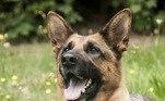 Em breve também terá um cão guia para auxiliá-la na reconquista de sua independênciaNÃO VÁ EMBORA:Tenso! Pescador se mantém imóvel para escapar de urso faminto ladrão