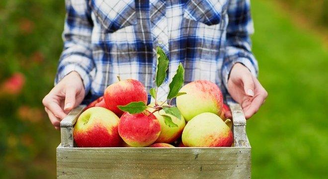 Em países em desenvolvimento, 50% dos alimentos são desperdiçados antes de chegar aos supermercados