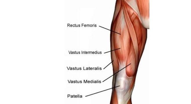 Musculos Pernas
