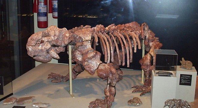 Museu da UFRGS conta com fóssil da mesma espécie consumida pelo fogo no Museu Nacional Crédito: Sergio Kaminski / Divulgação / CP