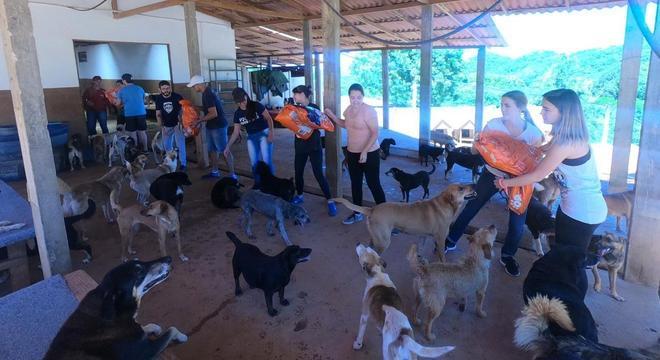 Voluntários se organizando para alimentar os animais