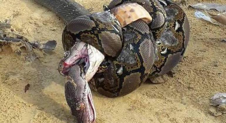 Esse é o resultado do encontro entre dois predadores espertos