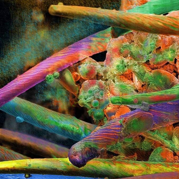 Nanoarte com o tema 'Amazônia' foi escolhida por Enio para exposição