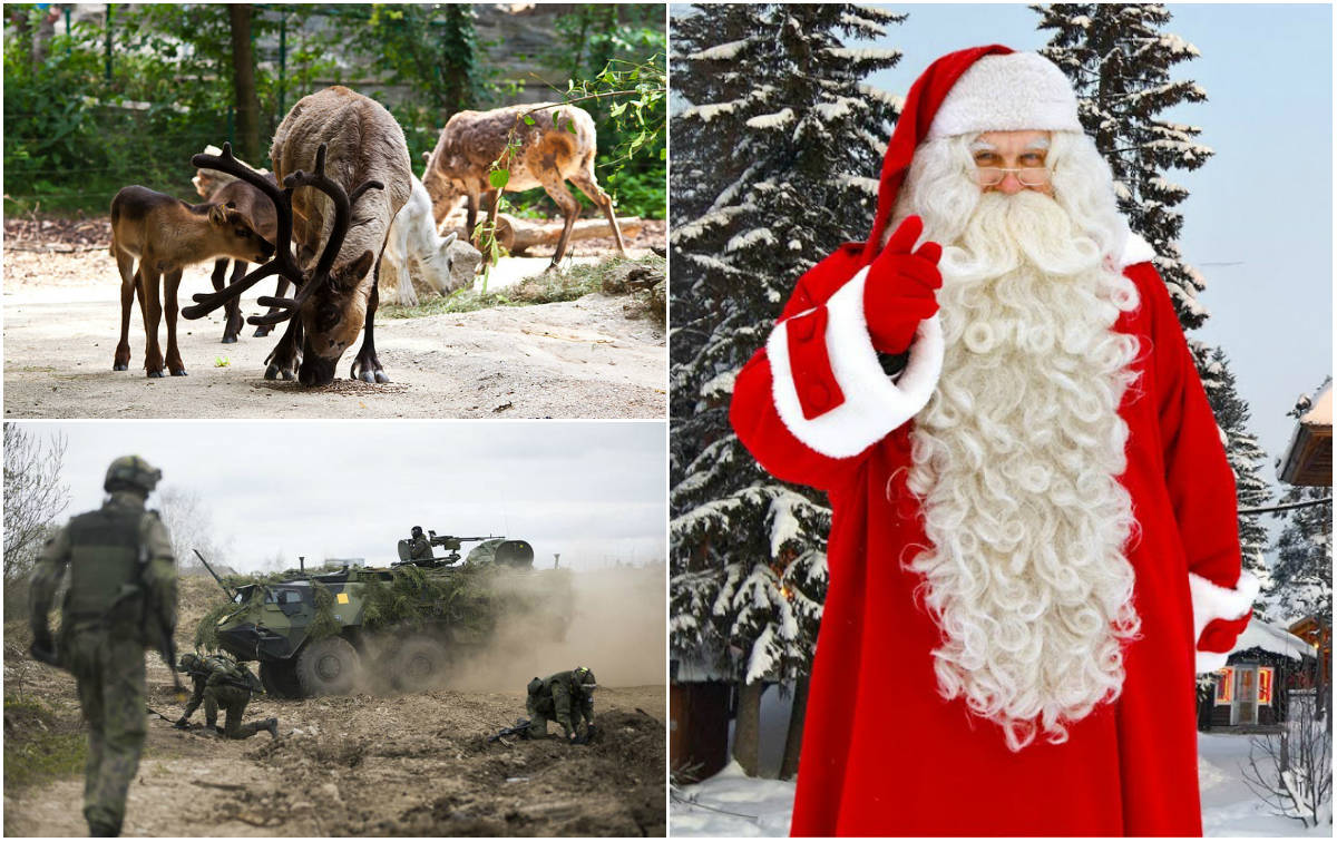 A Rena Mais Famosa Do Papai Noel já é natal! acidente com renas deixa 12 soldados feridos na