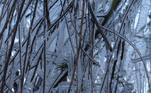 A frente fria, que chegou nesta semana, tem provocado chuvas, temperaturas abaixo de 0 ºC, granizo e neve, principalmente nas regiões Sul e Sudeste do País.O frio não poupou os galhos desta árvore na cidade de Urupema (SC)