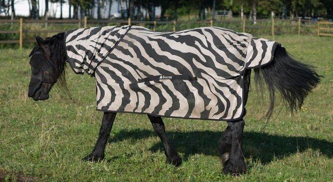 colocaram cavalos em casacos com estampa de zebra para observar como as moscas reagiam a eles