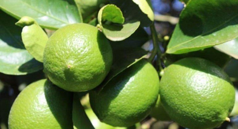 Nome do alimento: Limão