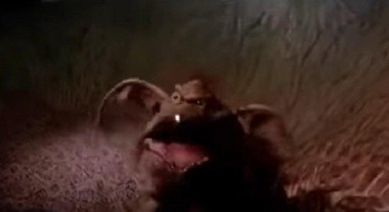 Nome do personagem: Salacious B Crumb - Filme: O Retorno de Jedi (1983) - Alien meio macaco-meio lagarto que servia como bobo da corte no Palácio de Jabba, sempre rindo do sofrimento dos outros nas mãos do gangster Hutt.