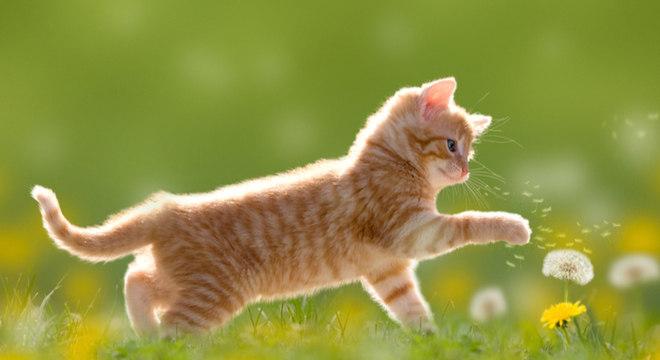 Nomes de gato: 20 opções mais populares para se inspirar