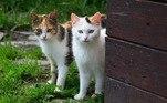 O app foi feito com base em uma pesquisas da Universidade Estadual do Colorado, que descobriram que os amantes de gatos são frequentemente esquecidos em outras plataformas de relacionamento