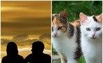 Se você é um amante de gatos e vê uma infinidade de felinos peludos no seu futuro, vocêprecisa encontrar alguém que pense da mesma maneira. Assim nasceu o app Tabby Dates*Estagiária doR7, sob supervisão de Filipe Siqueira