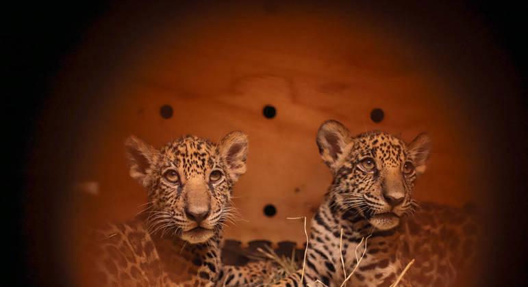 Animais foram encontrados abandonados em Mato Grosso