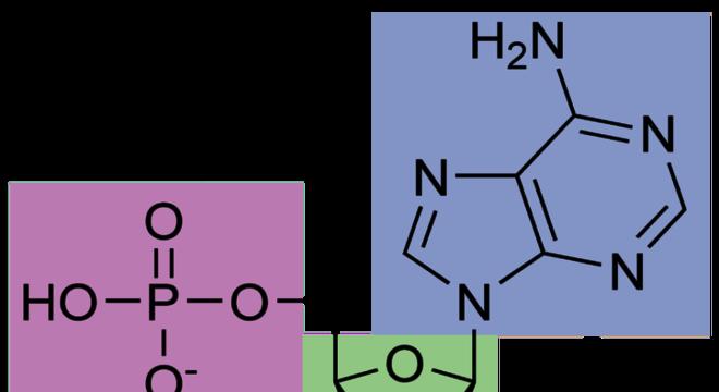 Nucleotídeos, o que são? Definição, estrutura e ácidos nucleicos