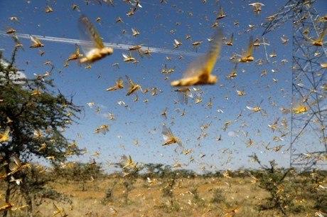 Nuvem de gafanhotos atinge áreas agrícolas da Argentina