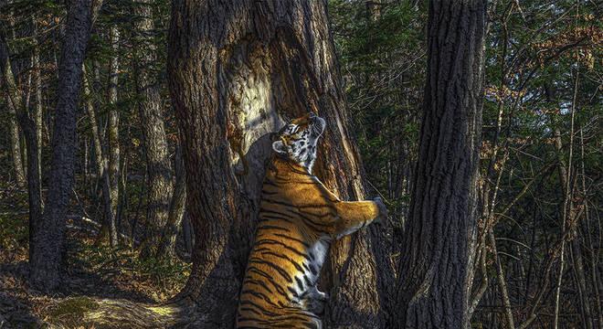 Imagem vencedora de Sergey Gorshkov se chama 'O Abraço'