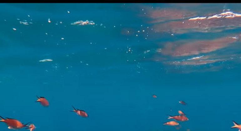 O arquipélago de Fernando de Noronha já é bastante conhecido em todo o Brasil. Ele reúne 21 ilhas em apenas 17km de área. Porém, apesar do tamanho, há muitos atrativos: trilhas, mergulhos, observação de golfinhos, surfe, passeio de berço e buggy, entre outros. As paisagens com areias douradas, água em tons de azul turquesa e verde esmeralda, vida marinha e as formações rochosas transformam o local em um verdadeiro paraíso natural.
