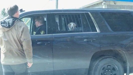 Foto de cachorro preso pela polícia e levado no camburão viraliza