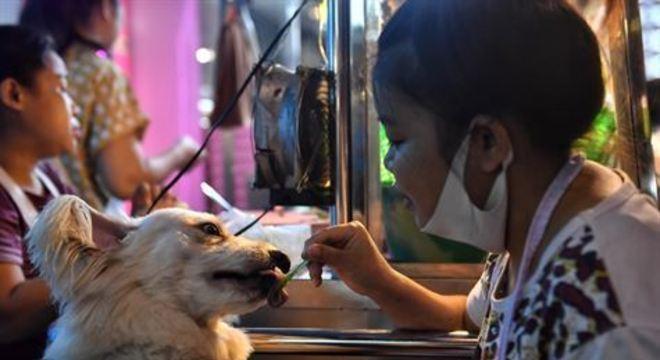 O isolamento social provocado pela pandemia do novo coronavírus levou moradores dos Estados Unidos a buscarem a companhia de animais de estimação