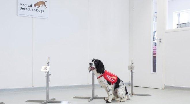 O olfato super sensível de Freya pode ajudar a realizar o primeiro teste de malária não invasivo