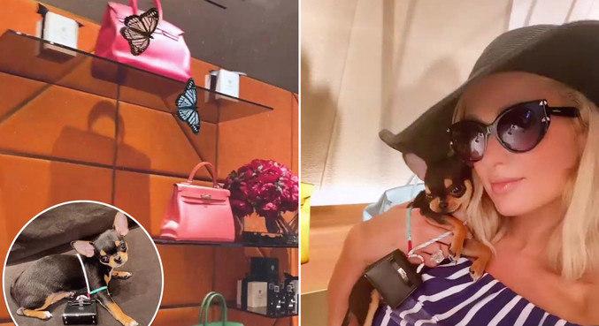 O pet de Paris Hilton ganhou bolsa caríssima