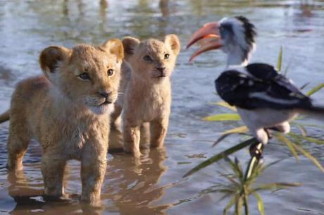 Simba e Nala ainda como filhotes e Zazu