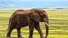 Elefante raivoso mata 16 pessoas após ser expulso de bando por rival