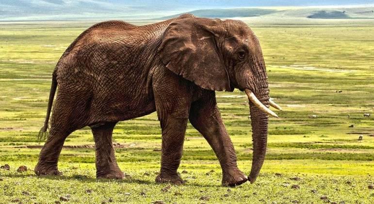 Animal provavelmente foi expulso por um rival sexual (imagem de arquivo)