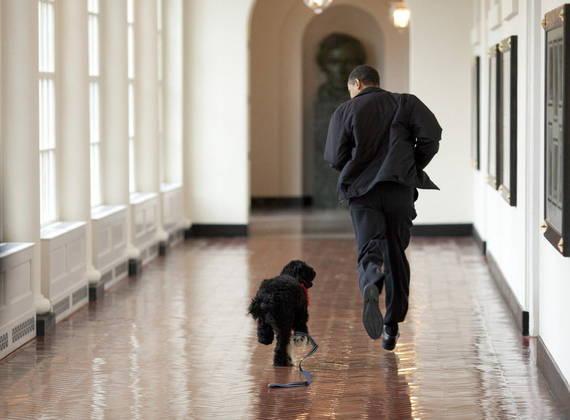 Na época de Obama, o ex-presidente levou o cachorro Bo, com quem brincava nos corredores vazios da Casa Branca