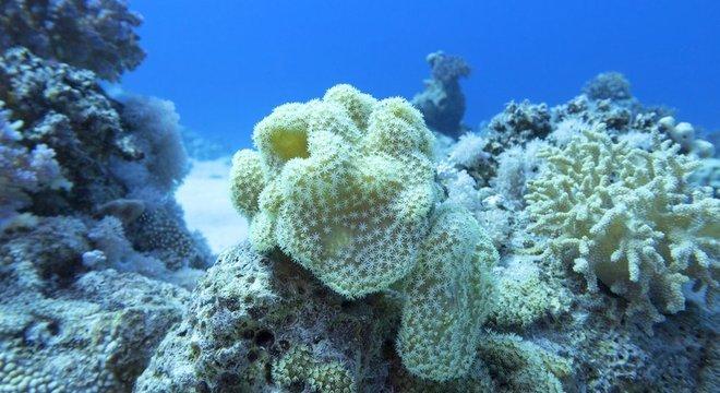 Os vírus contribuem para manter o equilíbrio dos ecossistemas