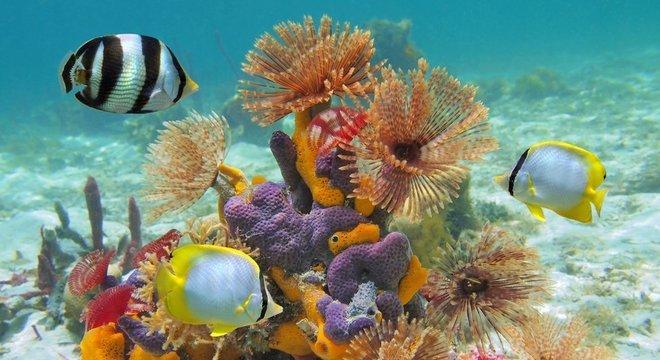 Os fagos são encarregados de manter o equilíbrio da vida bacteriana nos oceanos