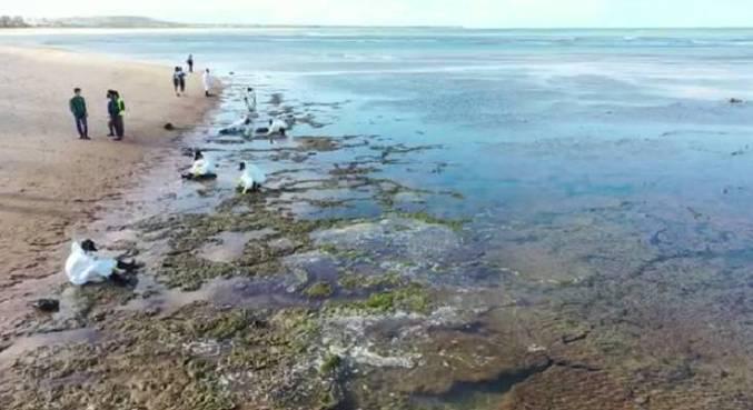 Vídeo mostra local atingido pelas manchas de óleo. Veja abaixo