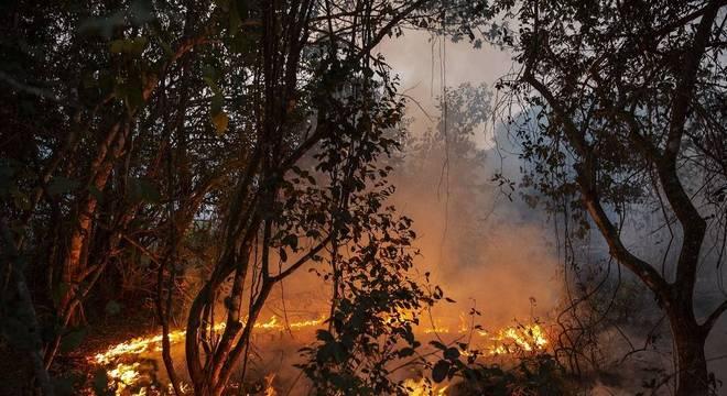 Incêndio florestal na fazenda São Francisco do Perigara, maior habitat de araras-azuis do Brasil