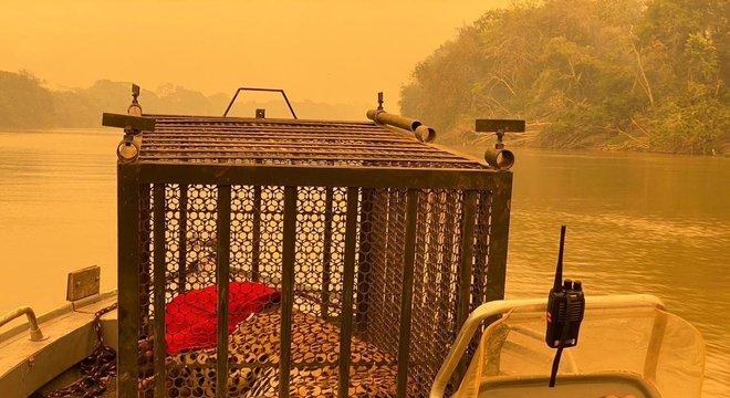 Onça-pintada foi resgatada no Parque Estadual Encontro das Águas, no Pantanal, na última sexta-feira (11)