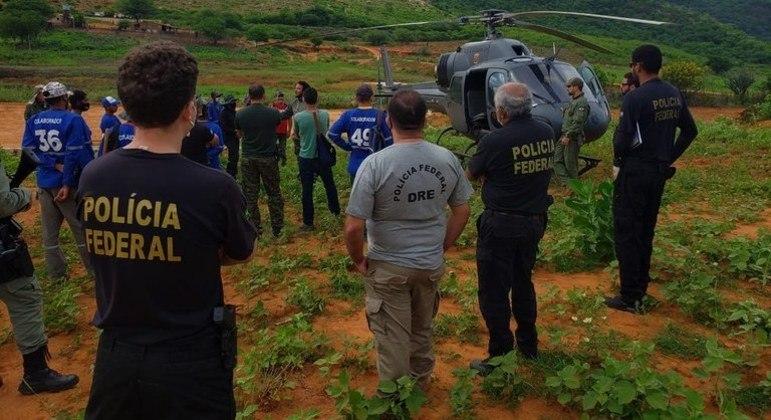 Operação Fusarium II erradicou 531 mil pés de maconha em Pernambuco