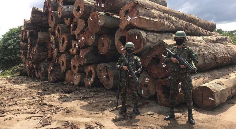 Apreensão de madeira feita pela Operação Verde Brasil 2, deflagrada pelas Forças Armadas