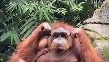 Orangotango coloca óculos de sol e prova que ter estilo é para poucos