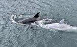 Porém, o caçador de tubarões queria gordura e nutrientes, segundo os estudos