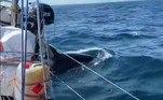 O último desses estranhos encontros ocorreu na ultima sexta-feira (11), com um barco da empresaHalcyon Yachts, que navegada em mares do norte da Espanha rumo ao Reino Unido