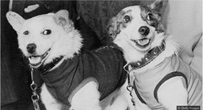 Cães provaram que animais poderiam sobreviver ao passar por cinturões radioativos