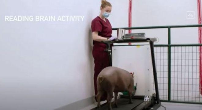 Os testes mais recentes do dispositivo foram feitos em porcos