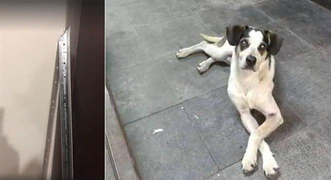 Barra de alumínio utilizada para agredir a cachorra que frequentava o Carrefour de Osasco