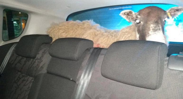 Animal parecia tranquilo dentro do veículo