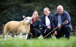 Uma ovelha de pedigree se tornou a mais cara do mundo, ao ser leiloada por uma verdadeira fortuna na Escócia*Estagiária doR7, sob supervisão de Filipe Siqueira