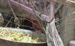 'Não mudei a comida. É a mesma para todos: milho, vegetais e folhas verdes', detalhouBombou no HORA 7!'Nova Barbie Humana' arrecada dinheiro de fãs para retirar costelas