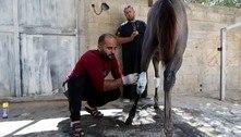 Palestinos aproveitam trégua em Gaza para tratar animais feridos