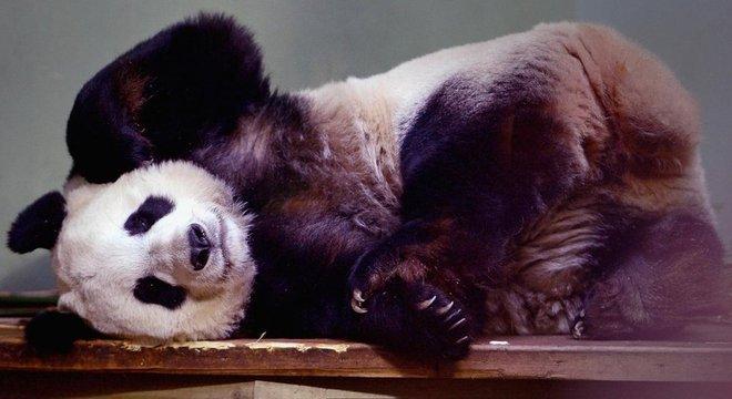 A chegada de dois pandas ao zoológico de Edimburgo em 2011 foi vinculada a acordos comerciais no valor de bilhões de dólares